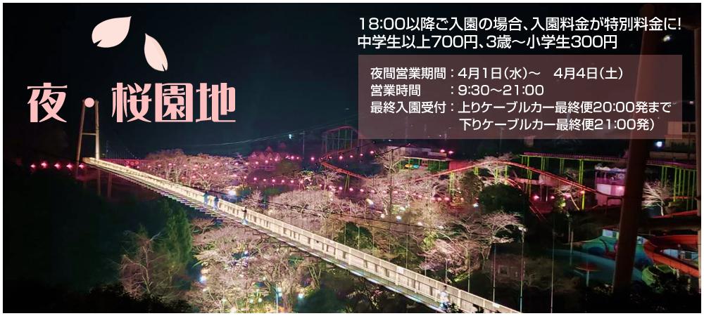 夜・桜園地